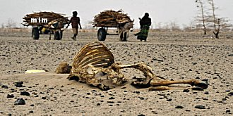 googline s'inquiète de la faim et la soif en Afrque Mimoun16