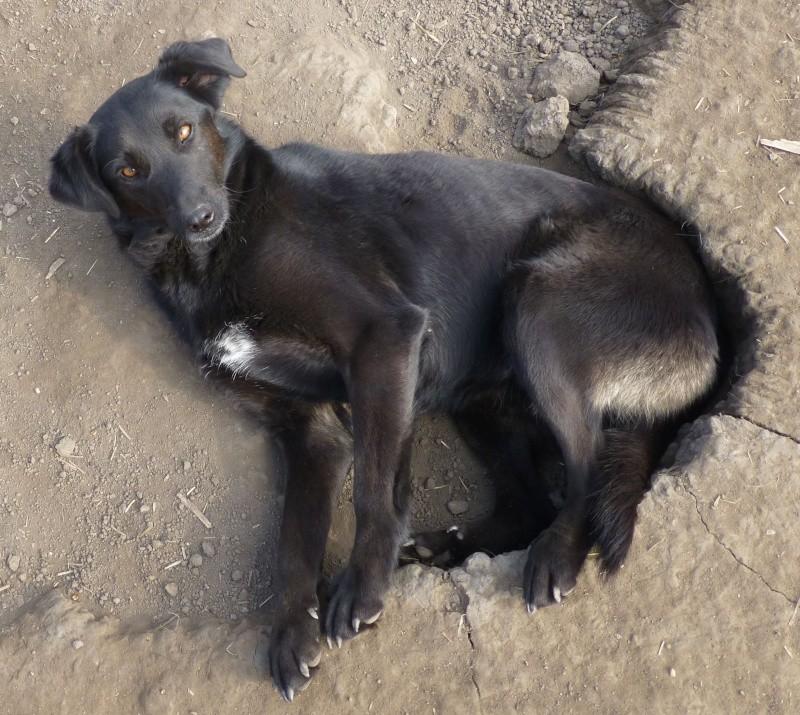kira - KIRA F-X, moyenne, env. 16 kg, née 2011 (BACKA) - En cours adoption par Audrey B. (Départ78) Kira10