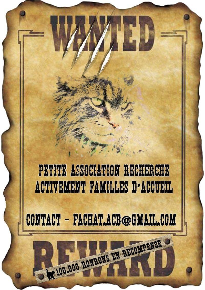 Affiches Recherche FA Affich11