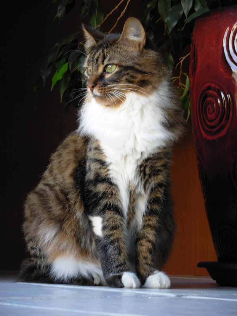 Oliver, mâle type européen tabby et blanc angora né en avril 2015 - Page 6 Dscn5112
