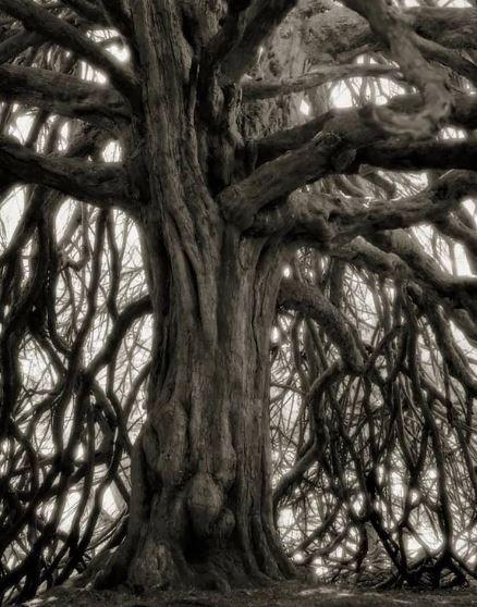 Les arbres  - Page 4 Arbr10