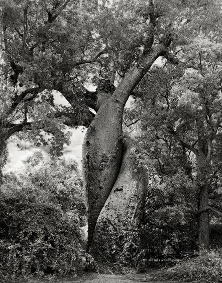 Les arbres  - Page 4 Arbr410