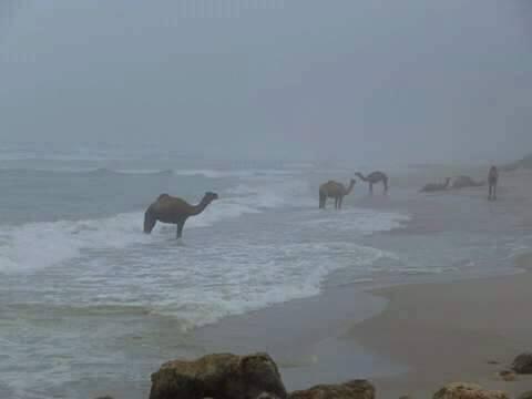 Une autre photo qui montre les merveilles d'Algérie. Merci Atmane pour la photo 219