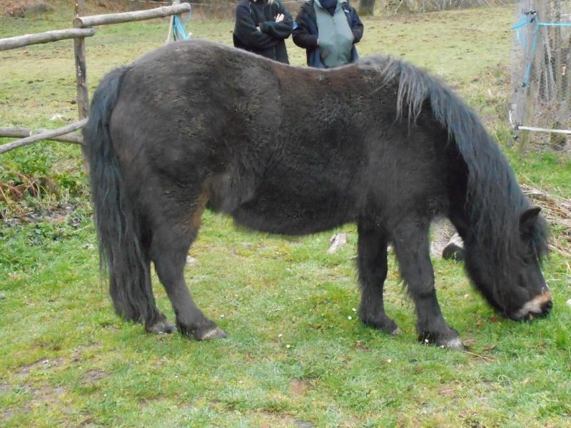 PRUNELLE - ONC poney typée shetland présumée née en 2000 - adoptée en août 2013 par Céline - Page 2 Dscn0419