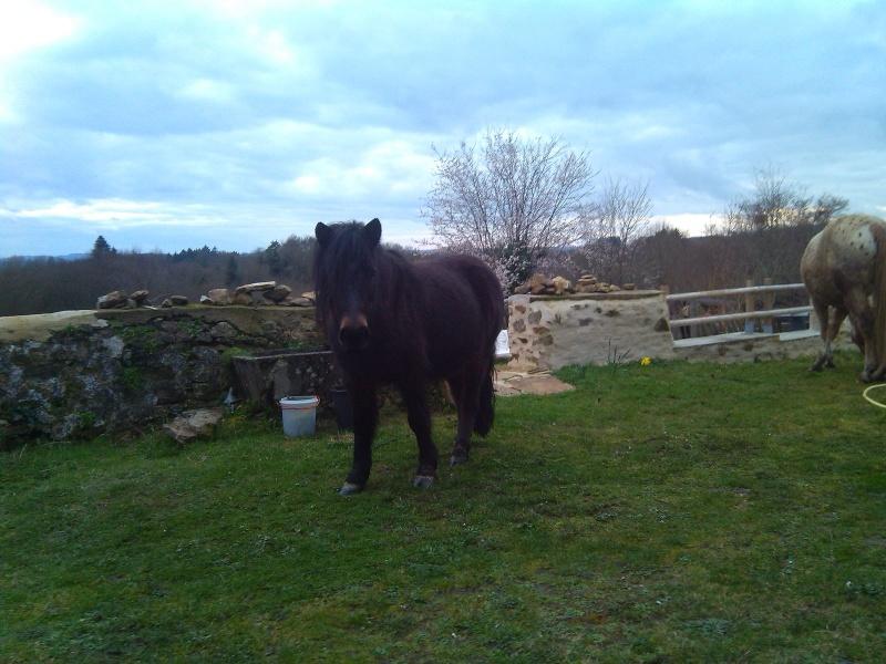 PRUNELLE - ONC poney typée shetland présumée née en 2000 - adoptée en août 2013 par Céline - Page 2 Img_2016
