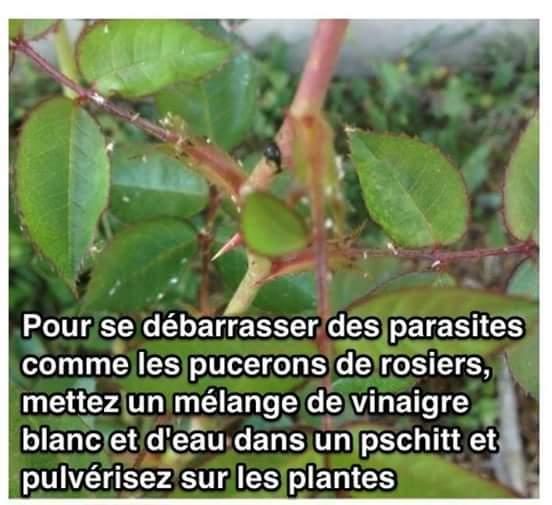 Parasites des plantes? Quel insecte et que faire? 12189810