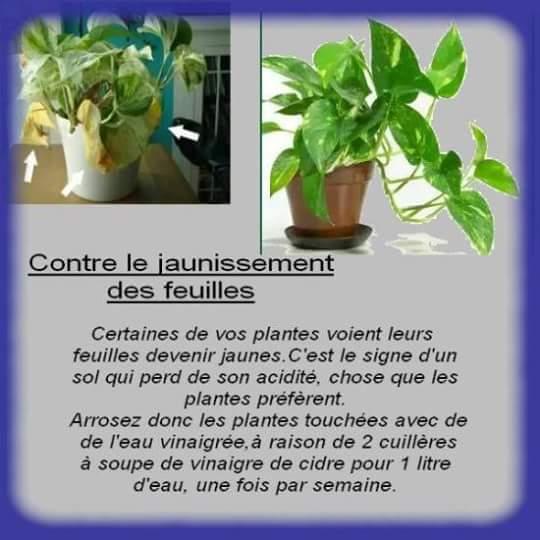 Trucs et astuces à savoir pour avoir de belles plantes! 12196011
