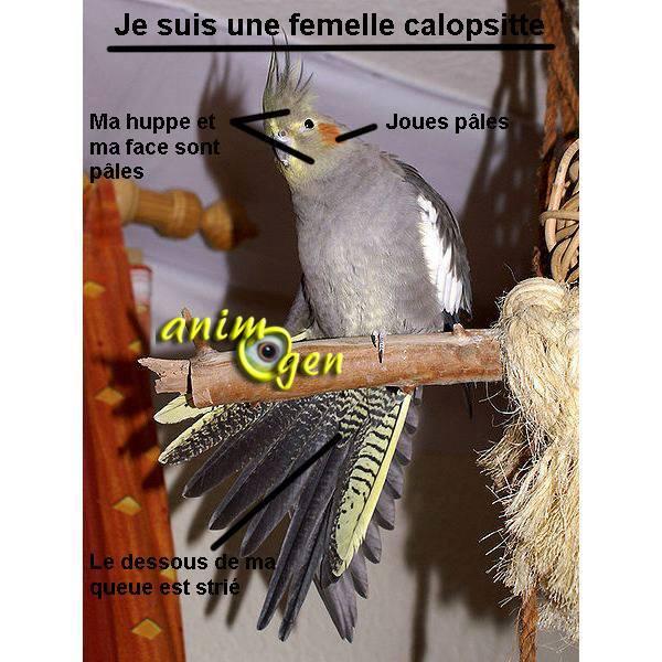 Fiches pratiques sur les oiseaux! 12321610