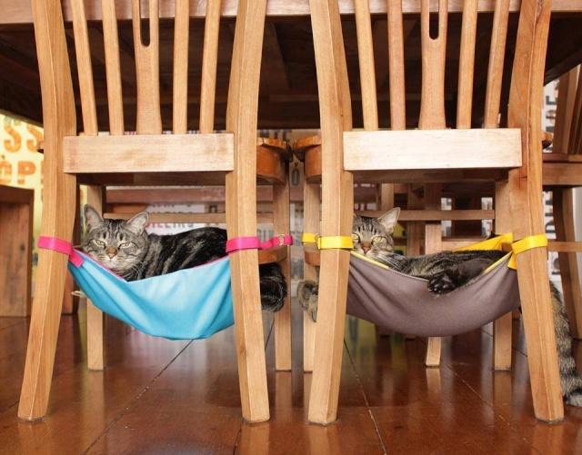 Idées et astuces pour Chiens et chats! 12742110