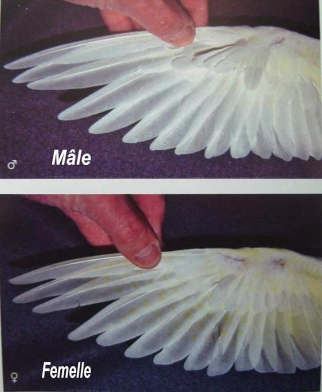 Fiches pratiques sur les oiseaux! 94080710