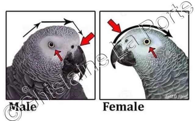 Fiches pratiques sur les oiseaux! E9927310