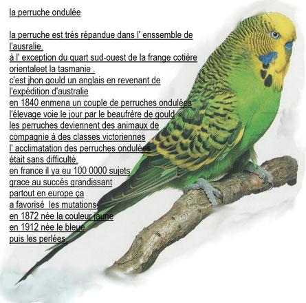Fiches pratiques sur les oiseaux! Pour-a10