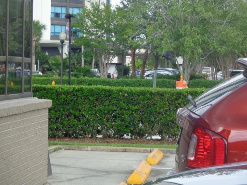 Orlando 2.0 et DCL 1.0 : Nouveau TR d'un vieux et néanmoins fabuleux séjour (aout 2014) 711