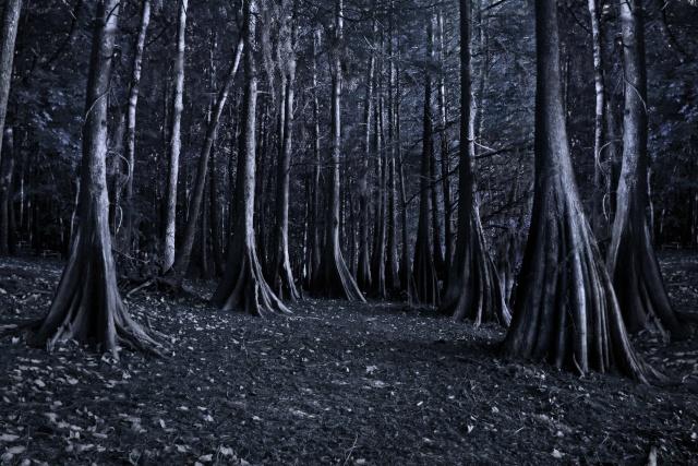 Arena - Woods Woods10