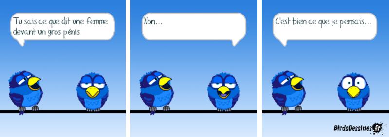 Quelques Birds ? Pas_d_19