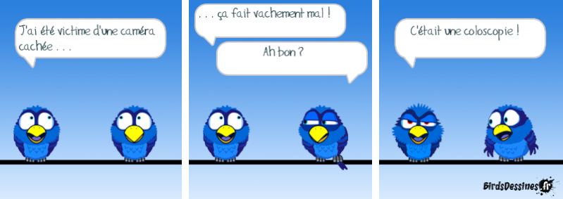 Quelques Birds ? Pas_da10