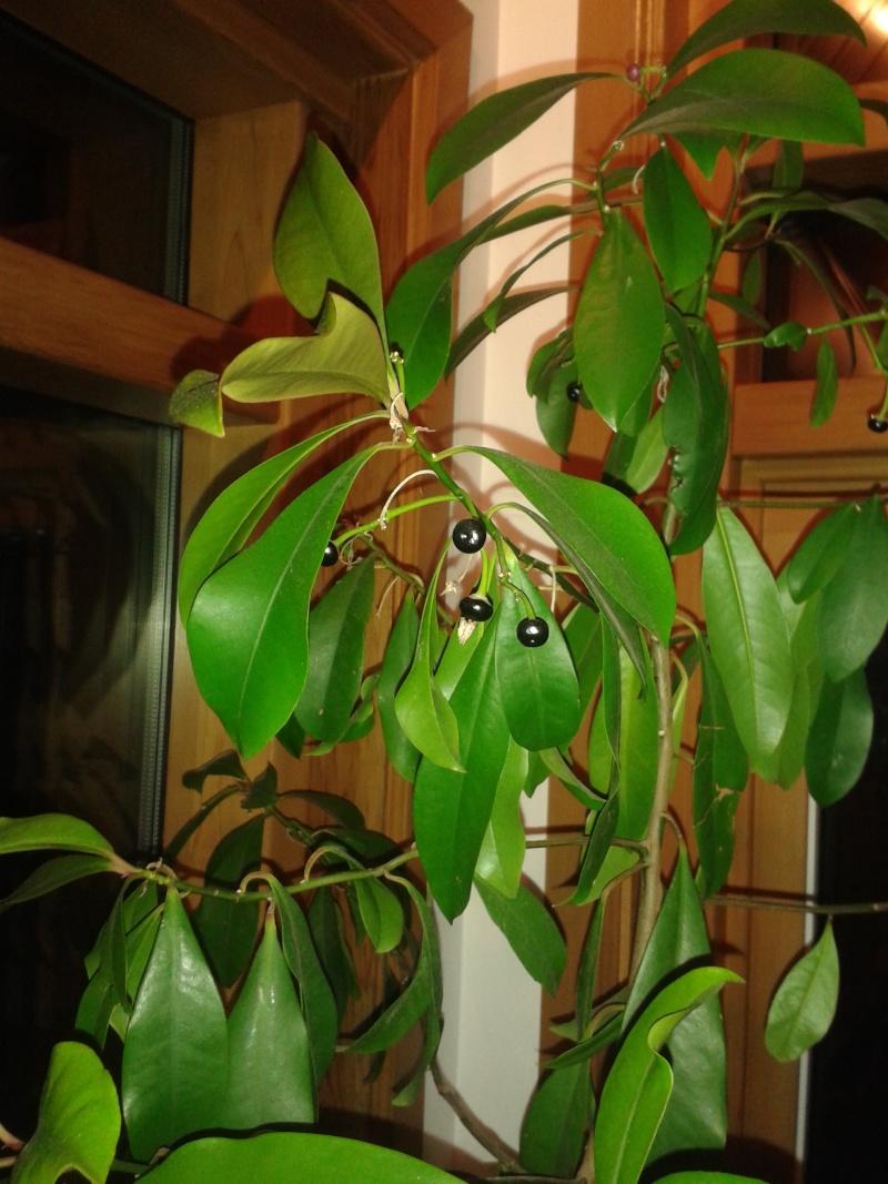 Identification de cette plante 20160211