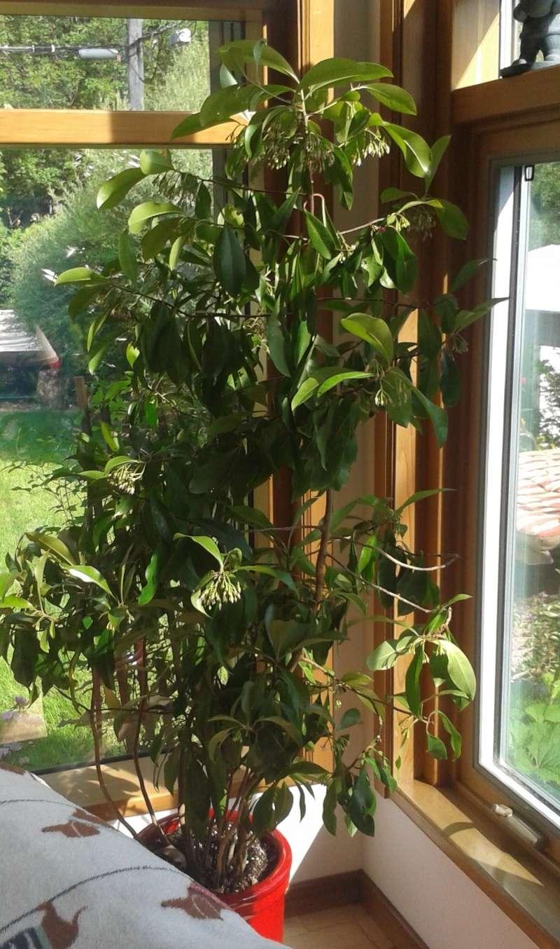 Identification de cette plante Plante12