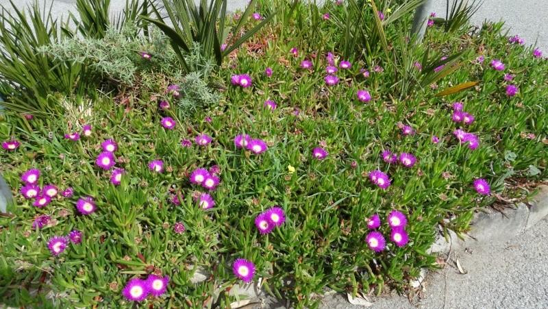 avez vous des plantes vertes - Page 3 Dsc03322
