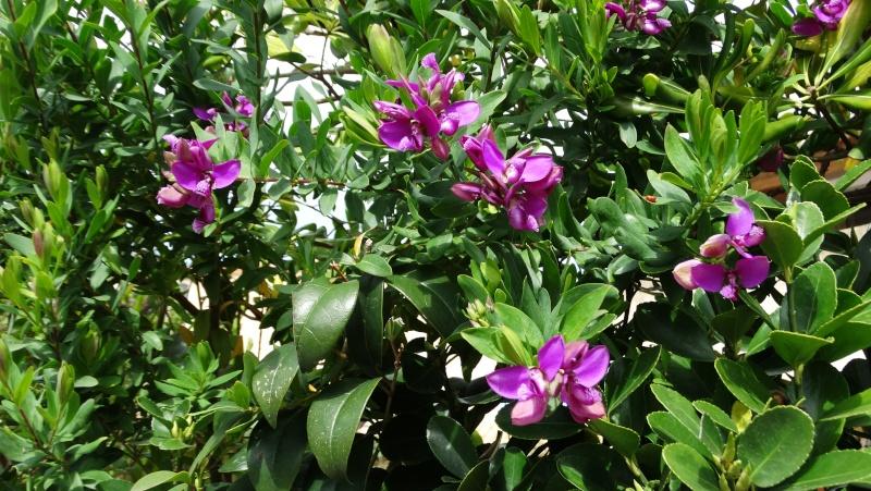 avez vous des plantes vertes - Page 3 Dsc03323