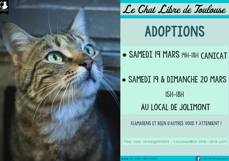 [ Adoptions ] Tous les samedis 14h - 18h chez CANICAT  - Page 2 19-20m12
