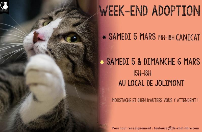 [ Adoptions ] Tous les samedis 14h - 18h chez CANICAT  - Page 2 5-6mar10