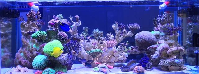 Nouvelle Maison / Nouveau projet : Alexpilon's reef tank 3 - Page 3 Fullsi10