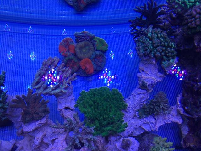 Nouvelle Maison / Nouveau projet : Alexpilon's reef tank 3 - Page 3 Img_1210
