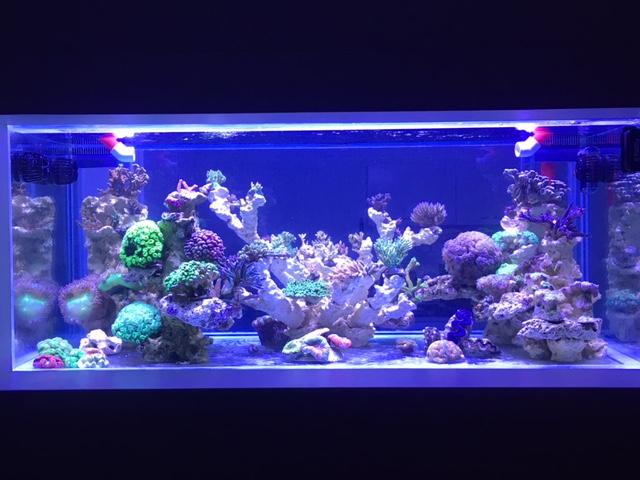 Nouvelle Maison / Nouveau projet : Alexpilon's reef tank 3 - Page 3 Img_1211
