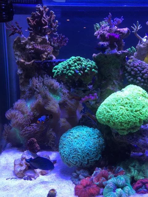Nouvelle Maison / Nouveau projet : Alexpilon's reef tank 3 - Page 3 Img_1315