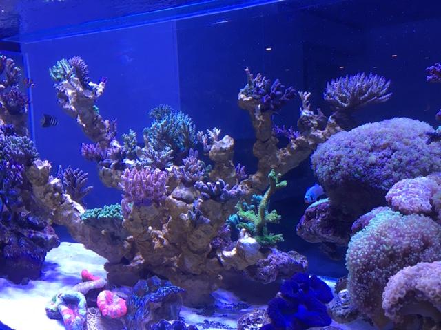 Nouvelle Maison / Nouveau projet : Alexpilon's reef tank 3 - Page 3 Img_1316