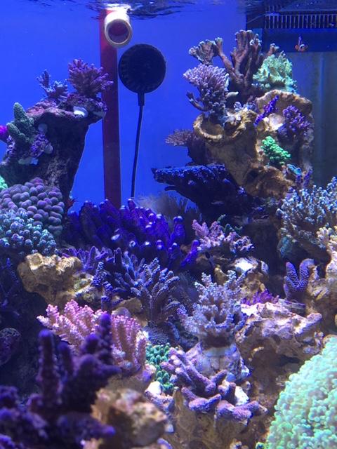 Nouvelle Maison / Nouveau projet : Alexpilon's reef tank 3 - Page 3 Img_1414