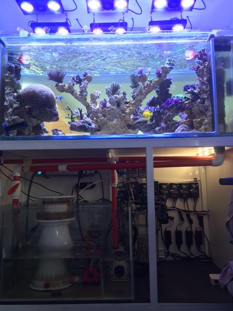 Nouvelle Maison / Nouveau projet : Alexpilon's reef tank 3 - Page 3 Img_1421