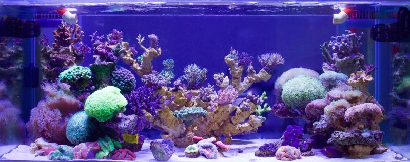 Nouvelle Maison / Nouveau projet : Alexpilon's reef tank 3 - Page 3 Img_2310