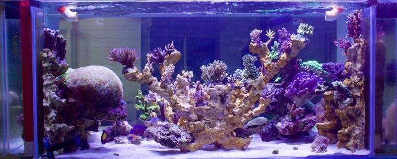 Nouvelle Maison / Nouveau projet : Alexpilon's reef tank 3 - Page 3 Img_2311