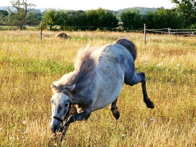L'équitation sans mors - Page 4 10313710