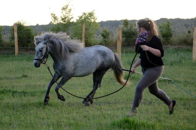 L'équitation sans mors - Page 4 10366210