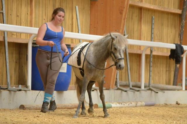L'équitation sans mors - Page 4 10409710