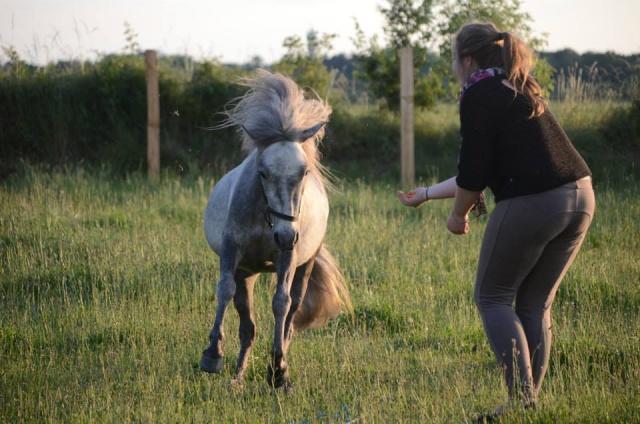 L'équitation sans mors - Page 4 10462810
