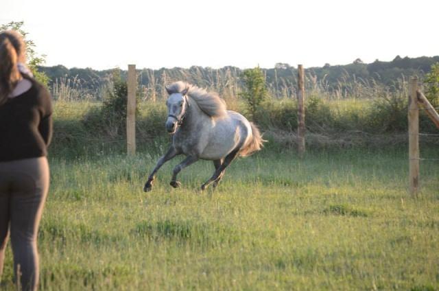 L'équitation sans mors - Page 4 10562910
