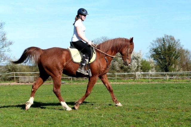 L'équitation sans mors - Page 4 10731110