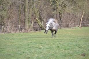 L'équitation sans mors - Page 4 11026210