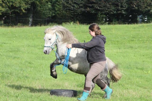 L'équitation sans mors - Page 4 12043110