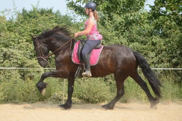 L'équitation sans mors - Page 4 15264910