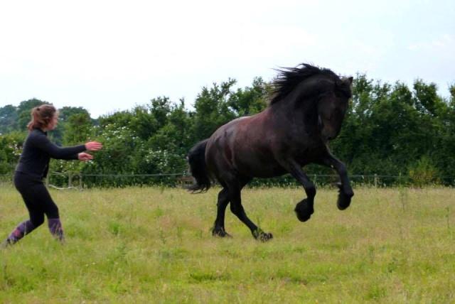 L'équitation sans mors - Page 4 16186610