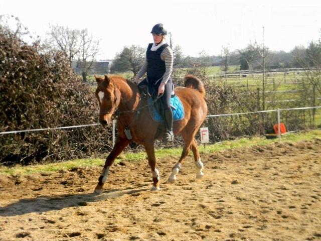L'équitation sans mors - Page 4 16236710