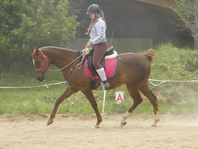 L'équitation sans mors - Page 4 19035910