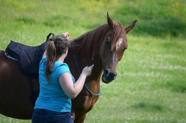 L'équitation sans mors - Page 4 Dsc_0011