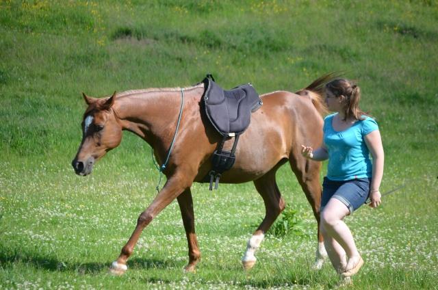 L'équitation sans mors - Page 4 Dsc_0012