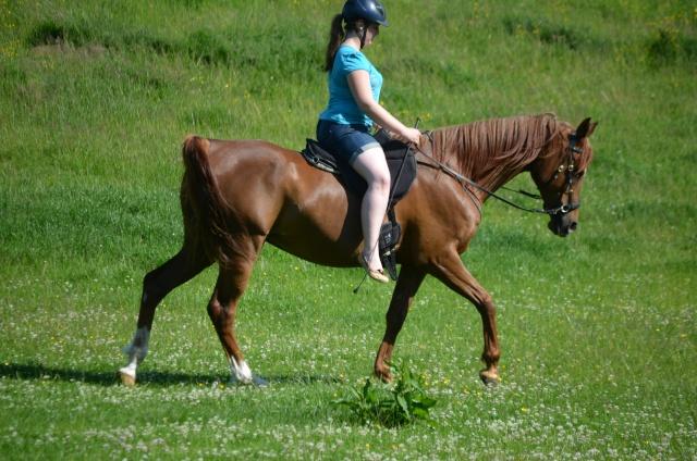 L'équitation sans mors - Page 4 Dsc_0210